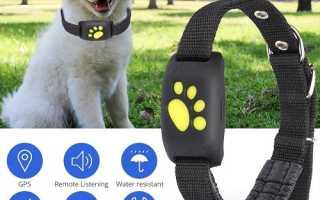 Как выбрать ошейник c gps навигатором для собак