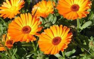Плед крючком из цветочных мотивов «Маргаритка»