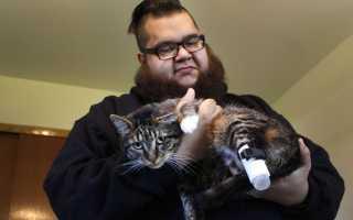 В Чикаго создали протезы для кота-инвалида
