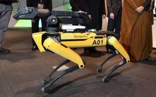 Анонсирован старт продаж роботов-собак