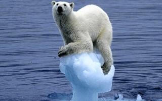 Климатический класс холодильника – что это, какой лучше?